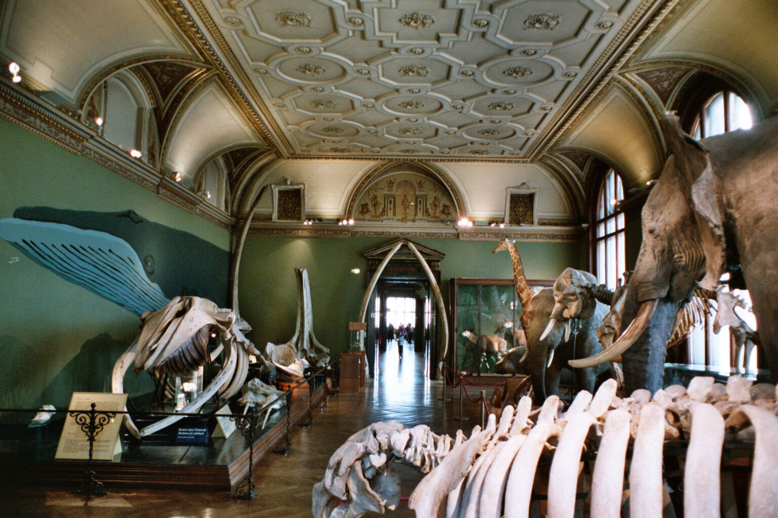 Hall of the museum in vienna c natural history museum